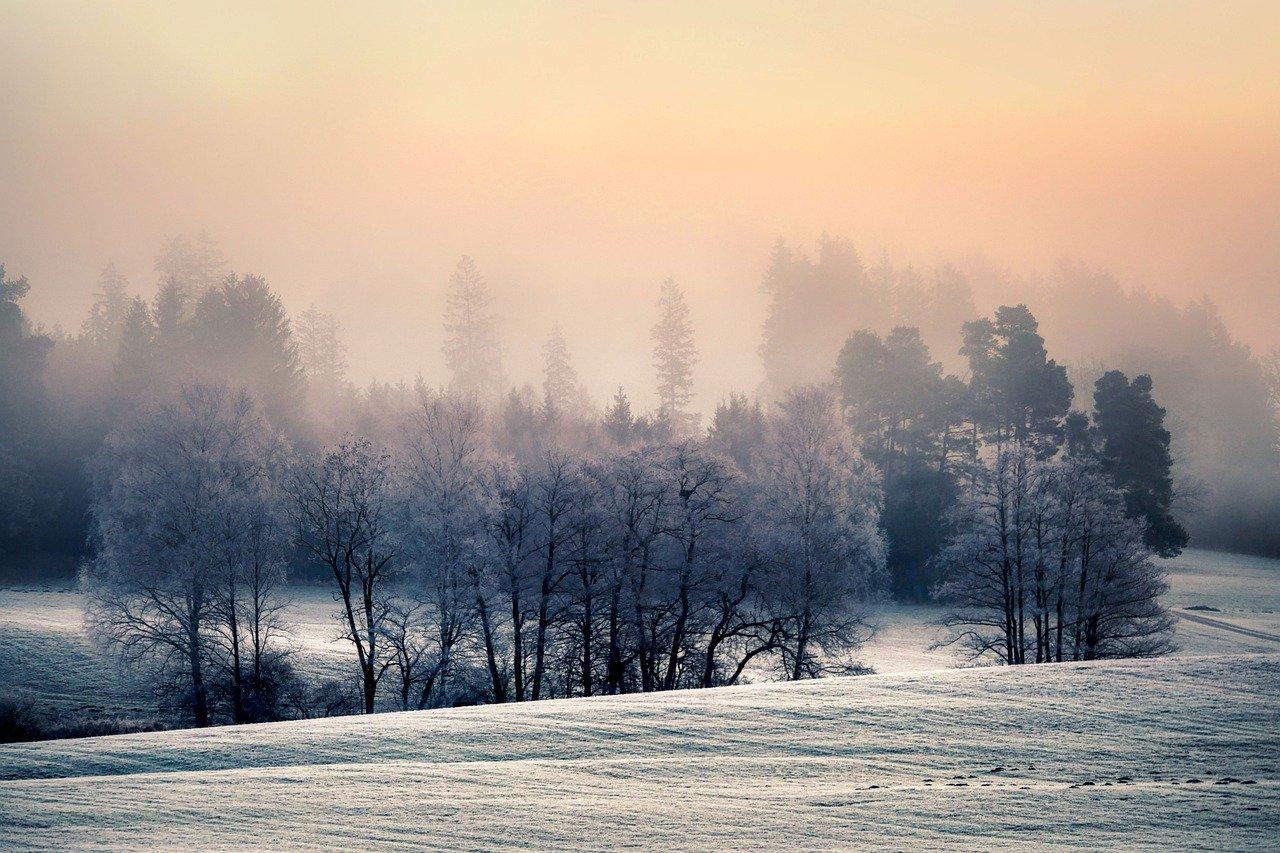 meadow, forest, fog
